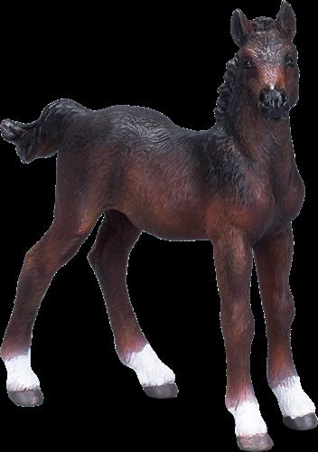 Mojo Horses - Hannoveraans Veulen Bruin 381018