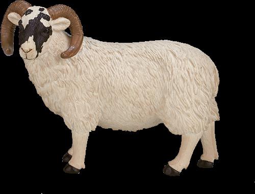 Mojo Farm - Zwartkopschaap (ram) 387081