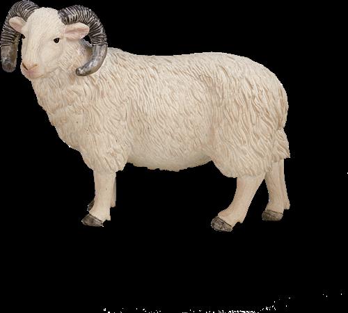 Mojo Farm - Schaap (Ram) 387097