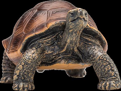 Mojo Wildlife - Reuzenschildpad 387259