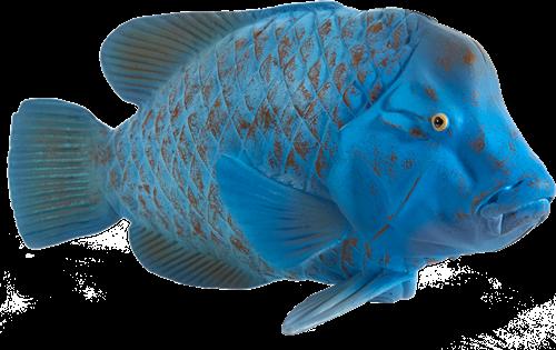 Mojo Sealife - Blauwe Groper 387356